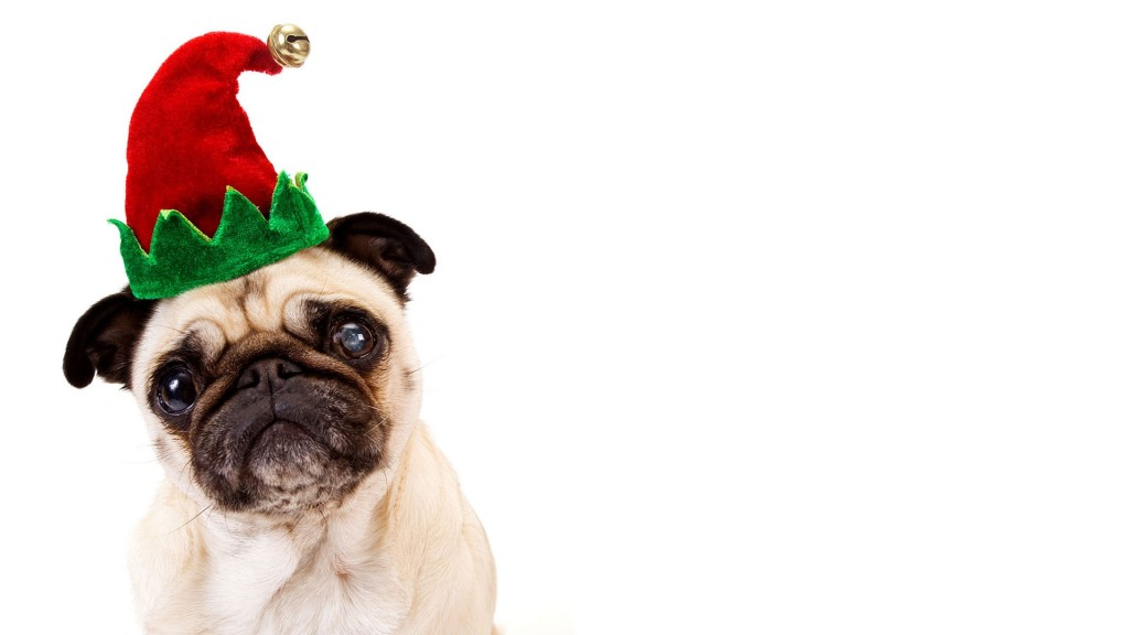 christmas pug music broke my bones mbmb